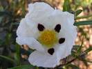 Nuestra Flora_5